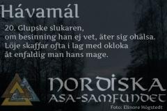 havamal-vers20