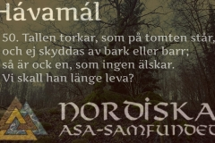 havamal-vers50