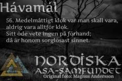havamal-vers56
