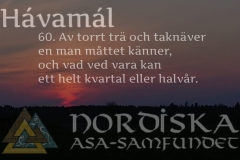 havamal-vers60